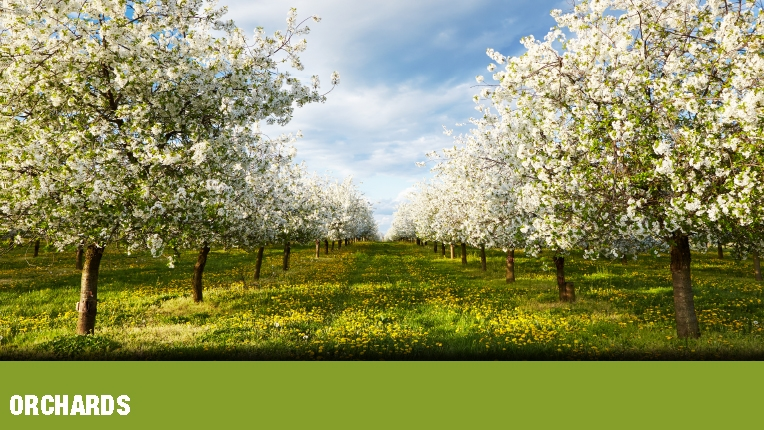 PEST MANAGEMENT : orchards